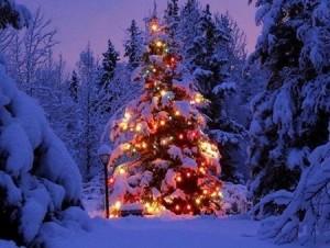 albero-di-natale-nella-neve